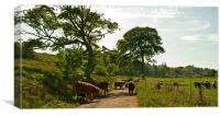 Rush Hour in Cromarty, Canvas Print