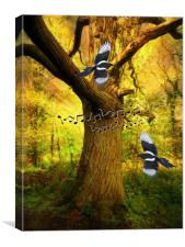 Magpie Melody., Canvas Print