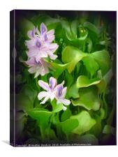 Water Hyacinth, Canvas Print