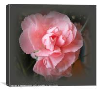 A Touch of Pink, Canvas Print