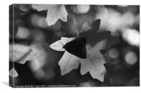 Silhouetted Butterfly, Canvas Print
