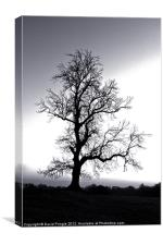 Tree Skeleton, Canvas Print