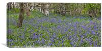Bluebell Woods II, Canvas Print
