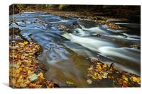 Autumn Leaves In Water II, Canvas Print