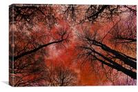 Tree Canopy, Canvas Print