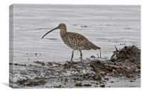 Curlew, Canvas Print