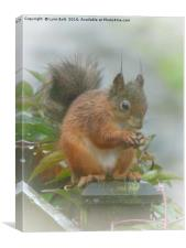Red Squirrel in the Rain, Canvas Print