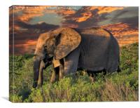 Elephants at Sunset, Canvas Print