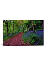 Bluebell Road, Canvas Print