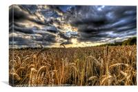 HDR field., Canvas Print