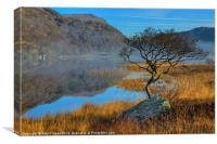 Lonely tree at Llyn Dinas, Canvas Print