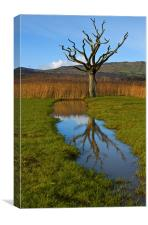 Dead tree in the reeds, Canvas Print