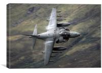 Harrier through the gap, Canvas Print