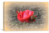 Red Rose with Two Buds, Canvas Print