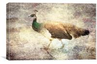 Peahen takes a Stroll, Canvas Print