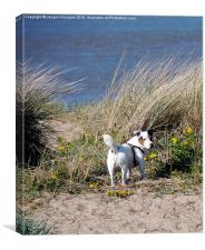 Doggie in the Dunes , Canvas Print