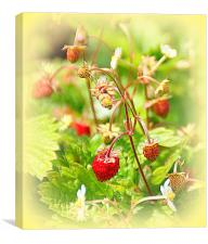 Strawberries for Tea, Canvas Print