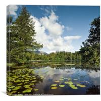 Tarn Hows, Canvas Print
