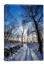 Woodland Path in Winter, Canvas Print