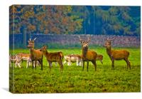 The Young Bucks, Canvas Print
