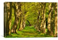 Avenue of Trees, Canvas Print