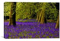 A walk in Bluebell Wood, Canvas Print