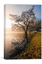 Tree Reflections, Ullswater, Canvas Print