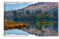 The Tree At Rydalwater, Canvas Print