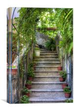 Potted plants and a dog on the steps, Canvas Print