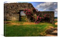 Flowers at Inchcolm, Canvas Print