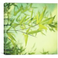 bamboo in the sun, Canvas Print