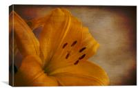 Yellow Lilium flower with texture overlay, Canvas Print