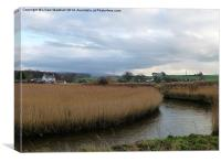 Reed beds at Thurnham, Canvas Print