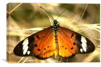 The Butterfly resting, Canvas Print