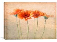 Orange Gerberas, Canvas Print