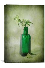 Astrantia still life, Canvas Print