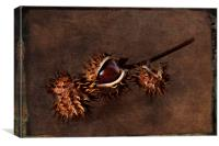 Conkers, Canvas Print