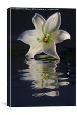 Lily., Canvas Print