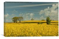 Yellow and Blue., Canvas Print
