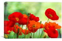 Poppy Display, Canvas Print