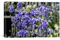 Bluebell Garden 1, Canvas Print