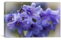 Bluebell Garden 3, Canvas Print