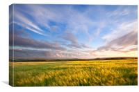 Barley On Willingcott Hill, Canvas Print