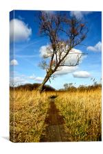 Tree in the reed beds, Canvas Print