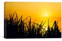 Sunrise through the reeds, Canvas Print