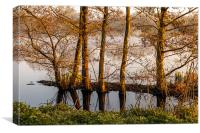 Trees in the Shallows, Canvas Print