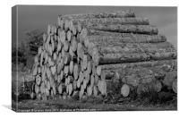 the wood pile, Canvas Print