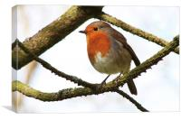 My Christmas Robin., Canvas Print