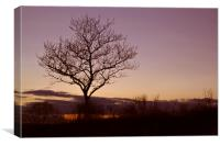 Tree Silhouettes at Sunset 2, Canvas Print