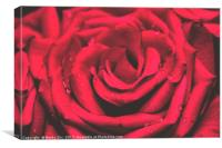 The Red Rose 1, Canvas Print